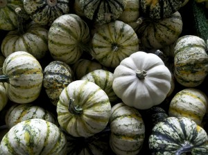 Pumpkins_Photography_Cook